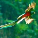 El-Quetzal-foto-por-Thorn-Janson-via-TACA-Regional