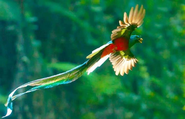 Miguel-Angel Asturias [Guatemala] El-Quetzal-foto-por-Thorn-Janson-via-TACA-Regional